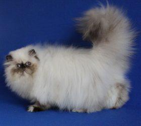 Galax-cat Lily