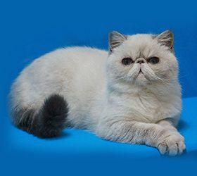 Galax-cat-Nikita1
