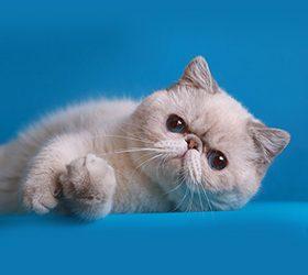 Galax-cat-Oskar-1