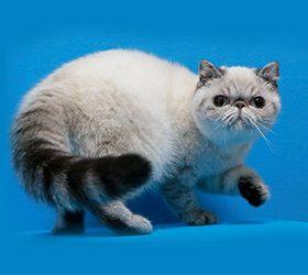 Galax-cat-Paula1