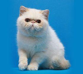 Galax-cat-Rachel1