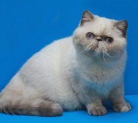 Galax-cat Stefi